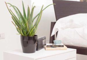 Arredare con le piante consigli per una casa pi verde - Piante che purificano l aria in camera da letto ...