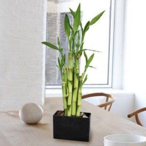 Arredare con le piante: consigli per una casa più verde - Convert ...