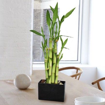 Arredamento piante bamb salotto convert casa for Arredamento bambu